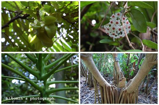 果樹園1.jpg